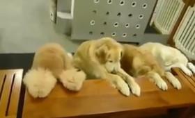 Μήπως τα ζώα είναι… φρονιμότερα των ανθρώπων; [Βίντεο]